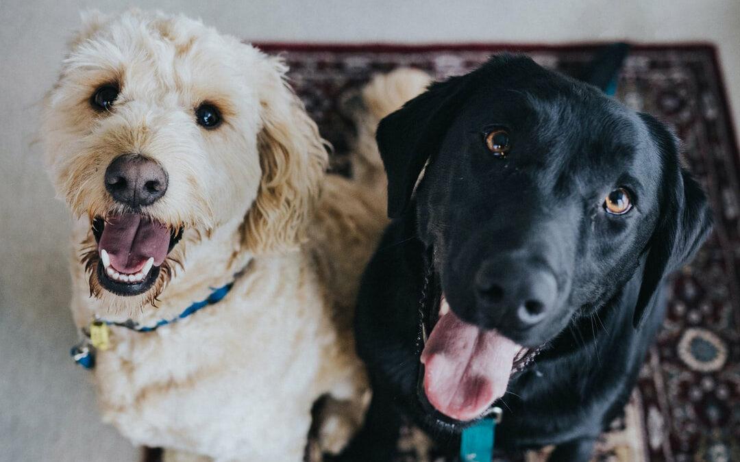4 gode råd til at lave en WordPress blog om kæledyr